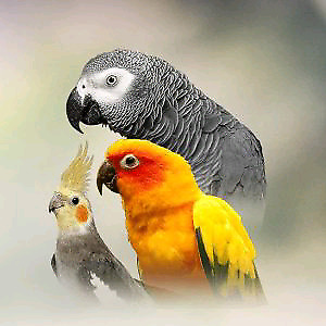 I want to adopt your bird!?