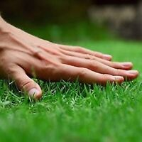 Do you need your lawn mowed?