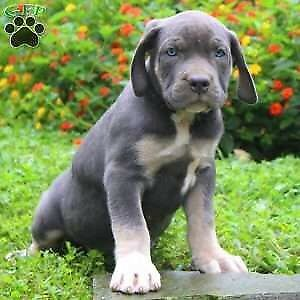 Looking young dog or older puppy