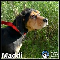 "Baby Female Dog - Coonhound: ""Maddi*"""