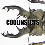 COOLINSECTS