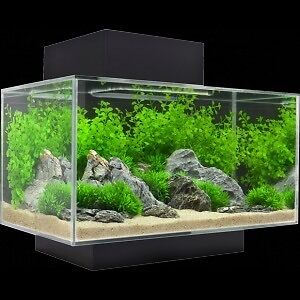 Used Fluval Edge aquarium plus heater Kingston Kingston Area image 1