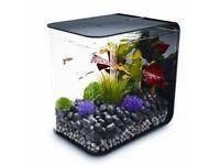 Biorb fishtank , tropical fishtank , fish tank