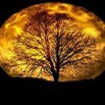 Harvest Moon Resale