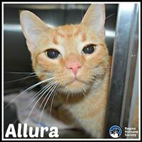 "Young Female Cat - Domestic Short Hair: ""Allura*"""