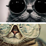 Cool Cat Collections