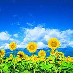 Summertime Sky