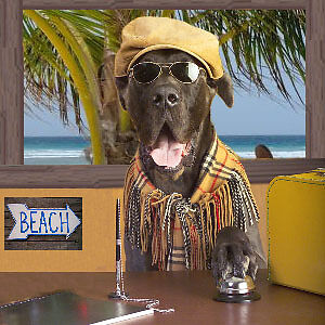 LABOUR DAY VACATION?.dog boarding only $17day includes overnight