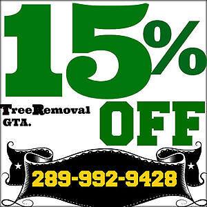 Tree removal,Ash,maple,pine,birch winter cutting service. Oakville / Halton Region Toronto (GTA) image 1