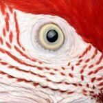 windy-city-parrot