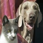 Pet Lovers Decor