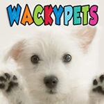 Wacky Pets