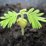 SeedsToGrow