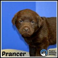 "Baby Male Dog - Shepherd: ""Prancer*"""
