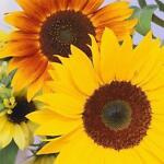 Sunflowers Consignment Shop