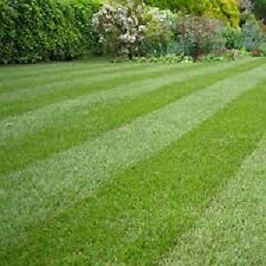 Outstanding Lawn, Garden & Home Care Peterborough Peterborough Area image 4