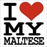 i_love_my_maltese