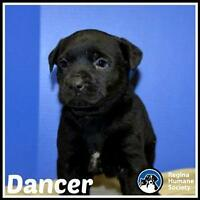 "Baby Male Dog - Shepherd: ""Dancer*"""