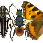Cosmin's insects