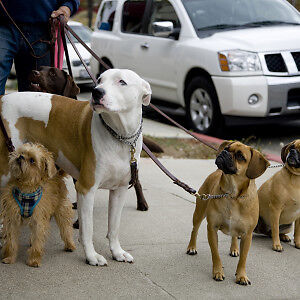 Free Dog Walker Available in Grandview Area