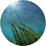 seaweedsound