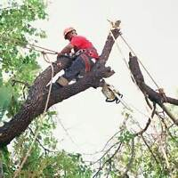 Limbing/Pruning/Tree Removal/Insured/Free Quotes