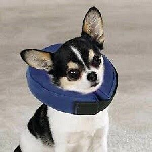 Show You Care with a New Inflatable Pet e-Collar