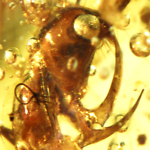 Amber Fossil Collection