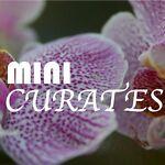 Mini Curates