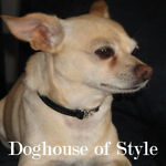 Dog House of Style