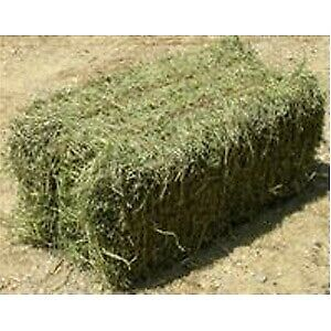 WANTED: 50 SQUARE BALES OF TIMOTHY HAY FOR HORSES.