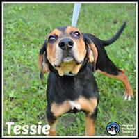 """Baby Female Dog - Coonhound: """"Tessie*"""""""