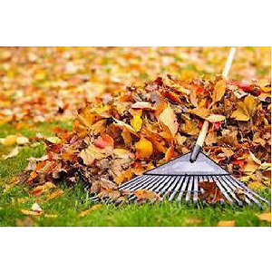 It's time to start thinking about fall cleanup!