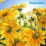 sheis2016
