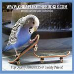 cheaplikethebudgiecom