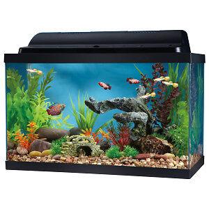 Fish Tank / Aquarium - 10 Gallons - GREAT PRICE!