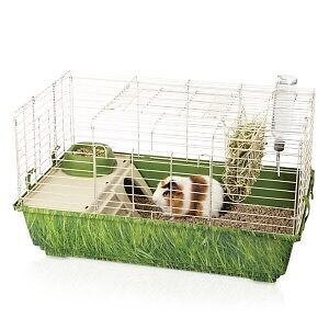 Guinea pig with cage, food and hay