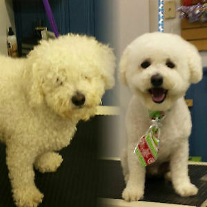 Trust the professionals for your pet's grooming!