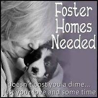 Fosters needed for cats & various sized dogs and puppies.