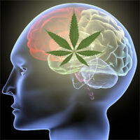 Recruiting individuals with Multiple Sclerosis who smoke Weed