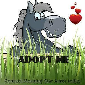 Adopt a Standardbred today - Apply within
