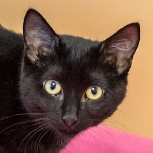 Meow Foundation's shy kitten Pye Pye looking for a chance!