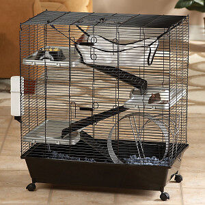 Looking for a cage for rats (ideally 2 story)