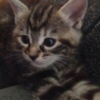 Male Kitten free to go a good home!!