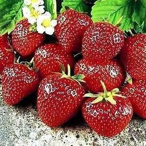 PLANTS THAT FEED YOU GROWER DIRECT ORGANIC GARDEN CITY FARM SATUR Maida Vale Kalamunda Area Preview