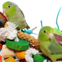 Affordable and always available small animal and bird pet sitter