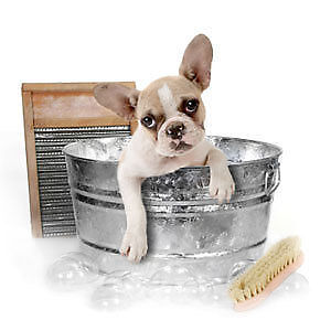 Pampered Paws Grooming ! Experienced and Certified groomer !