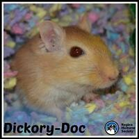 """Adult Female Small & Furry - Gerbil: """"Dickory-Doc"""""""