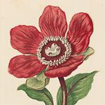 Summer Weeds Antique Prints
