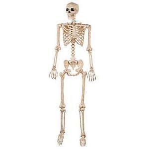 halloween life size skeleton